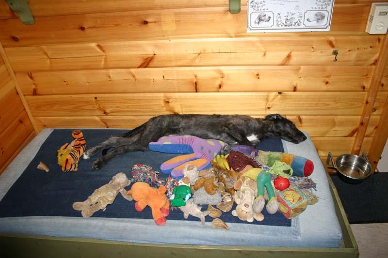 Zoveel speelgoed, daar word je wel moe van!