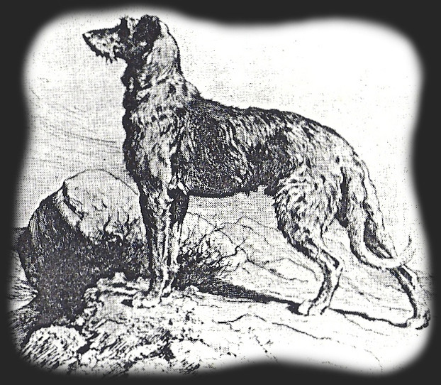 Picture Standing Deerhound