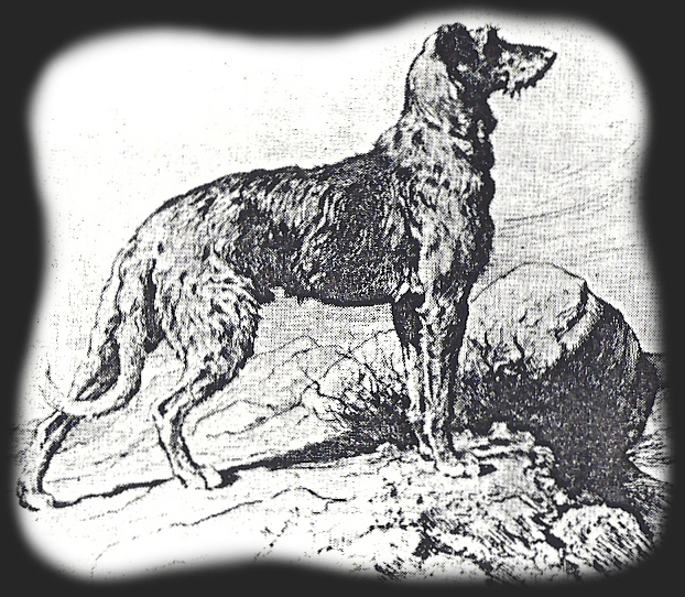 A Deerhound consists of curved lines.