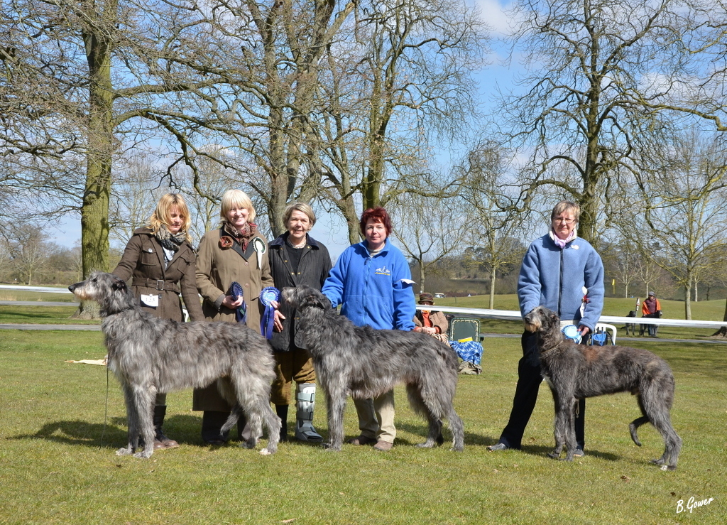 Deerhound Club OS 6APR13 Image 63 (Nikon ref 136)