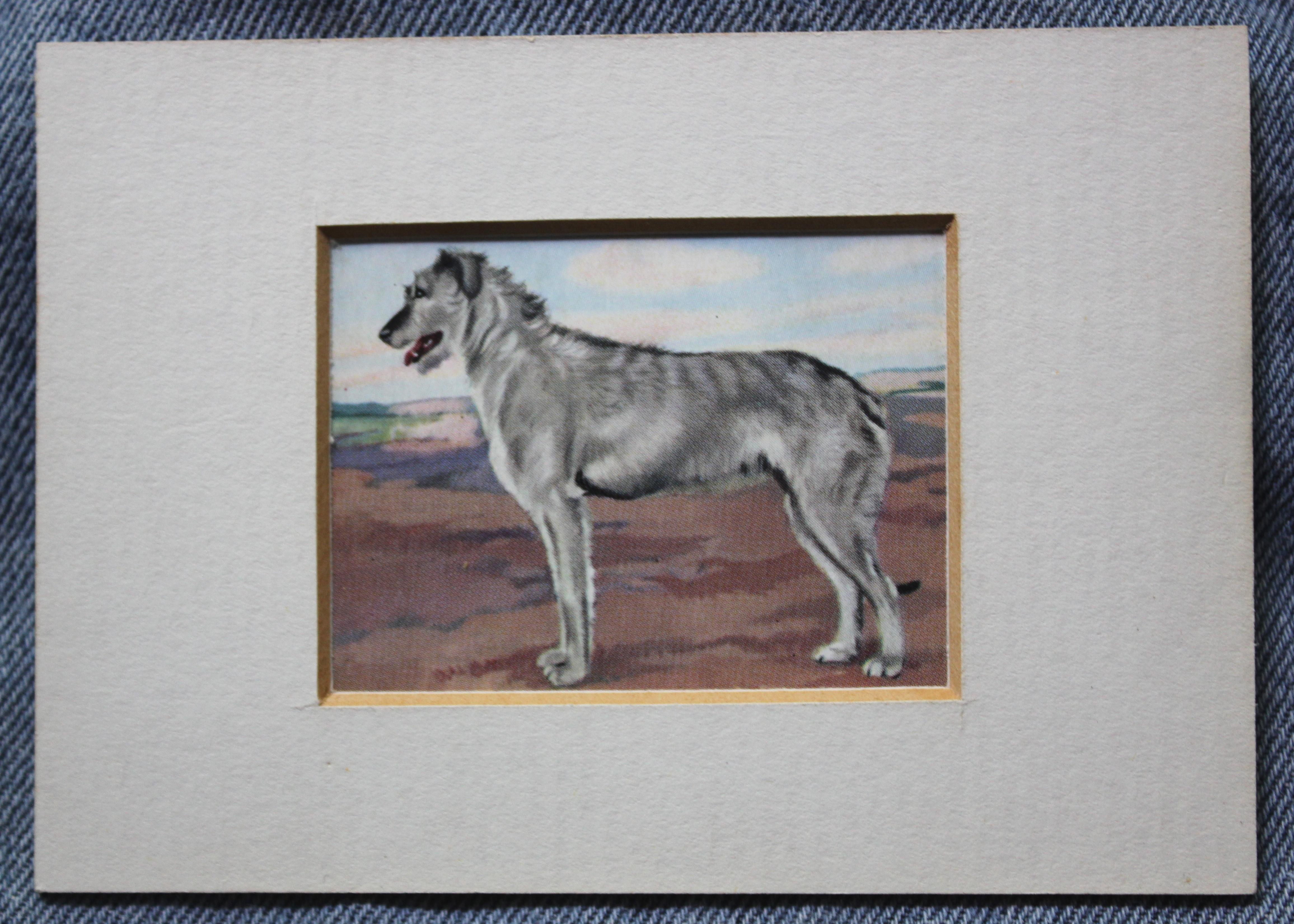 Te Koop. | o'cockaigne  Deerhound