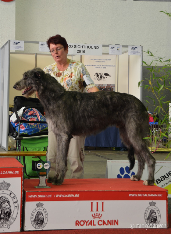 Chidish-Euro-sighthound-show-2016