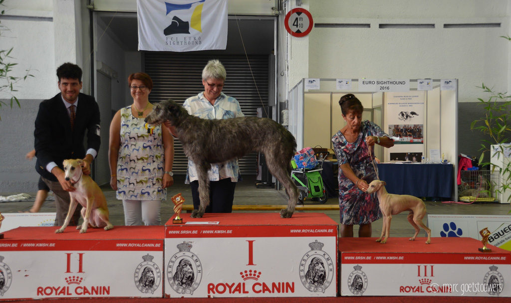 Vision-Euro-sighthound-show-2016